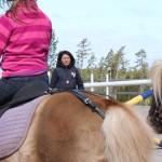 Bild ponnykul